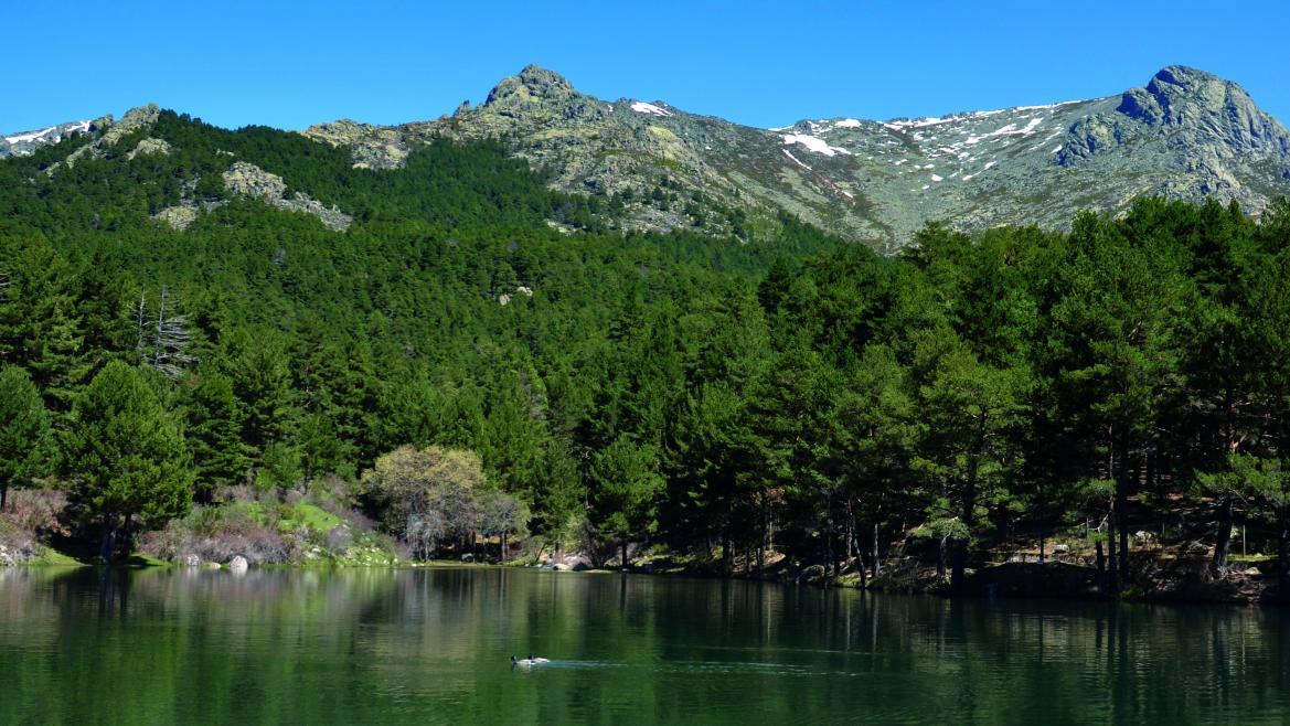 Desarrollamos un proyecto pionero para disminuir la huella de carbono en la Sierra de Guadarrama
