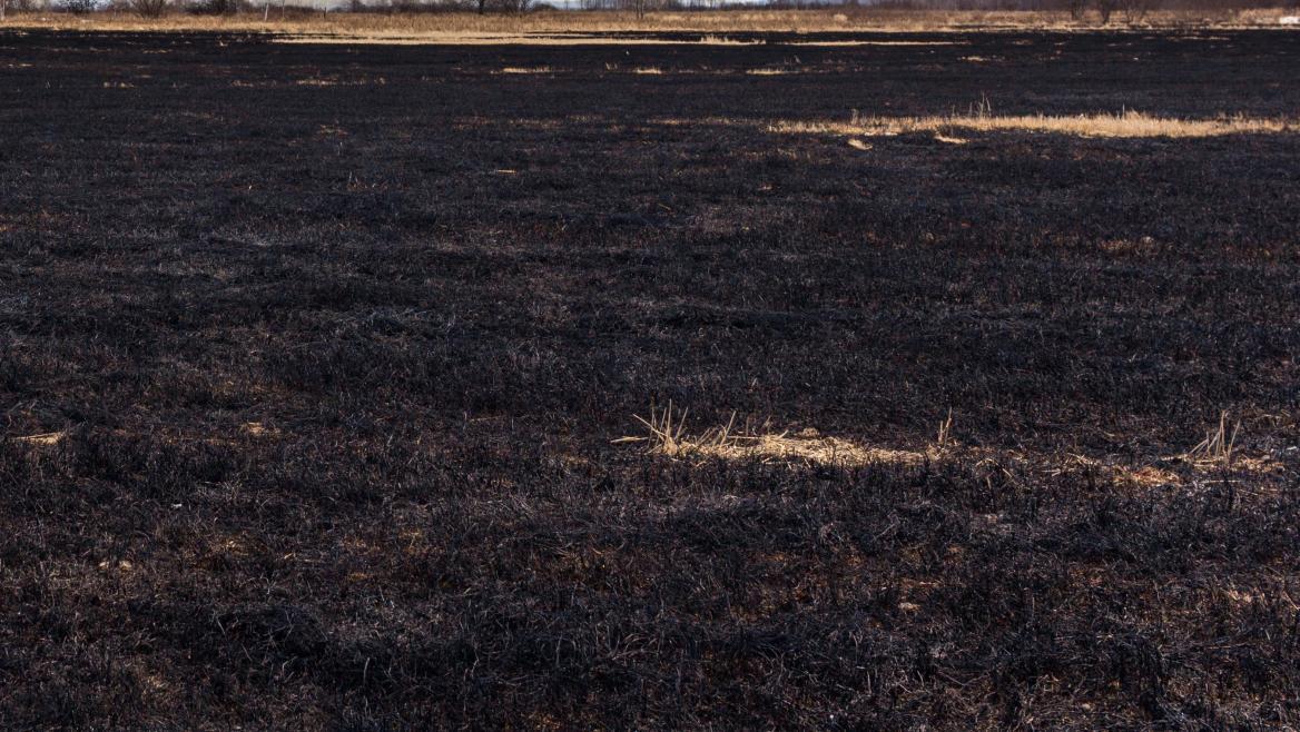terreno abrasado por las llamas de un incendio ya extinguido