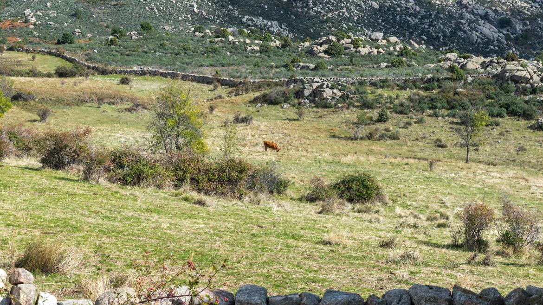 Prado en la sierra del Guadarrama