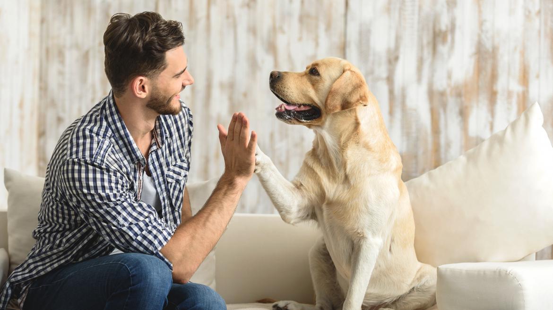 La Comunidad de Madrid invierte 2.247.000 euros en ayudas para el cuidado y protección de los animales de compañía