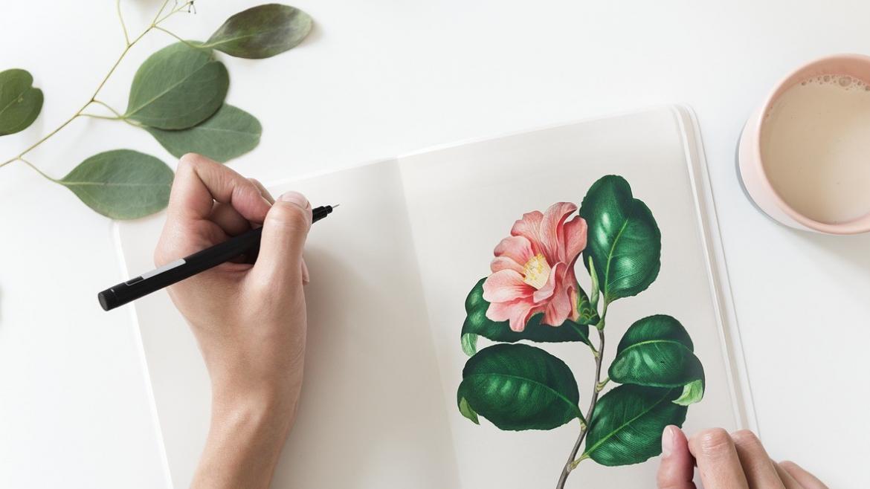 Dibujar planta lámina