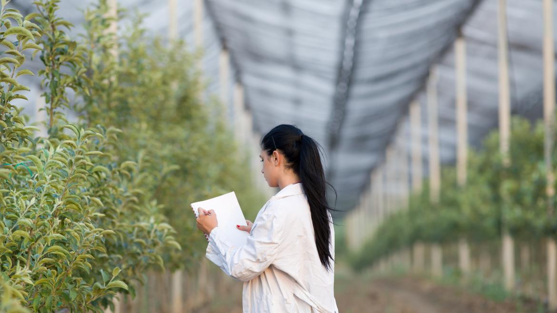 Investigadora agraria