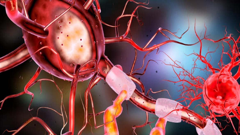 Neurona humana del cerebro.