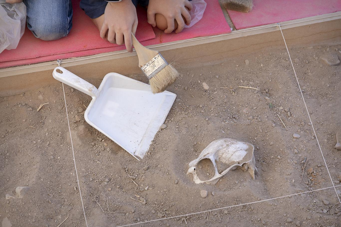 Arqueólogos por un día Complutum