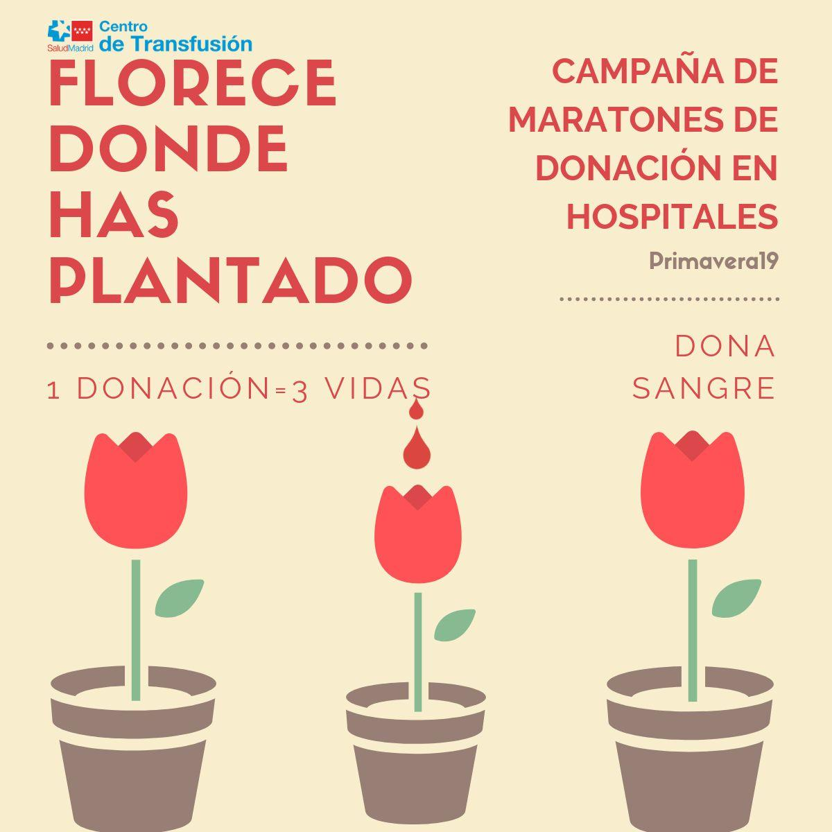 Tres tulipanes rojos con una gota y el texto Florece donde has plantado