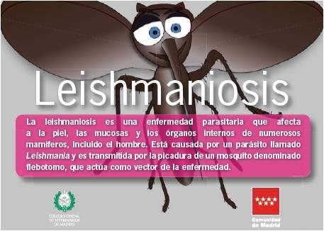 Portada de la publicación Leishmaniosis