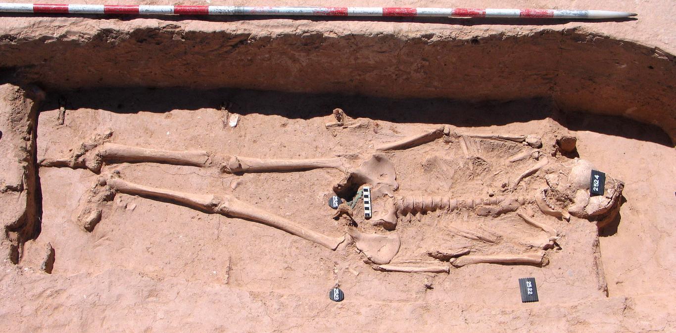 Imagen de la tumba hispano-visigoda varón maduro con hebilla de cinturón (2521)