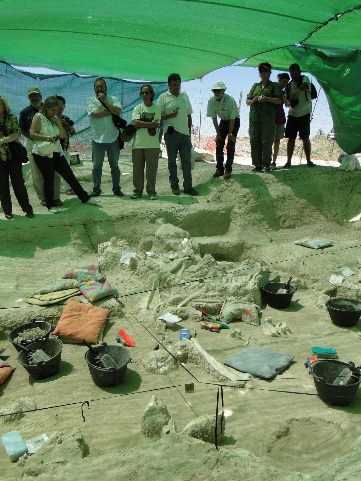 Imagen de Concentración de restos de grandes mamíferos durante la excavación del yacimiento Batallones 10 en el verano de 2010