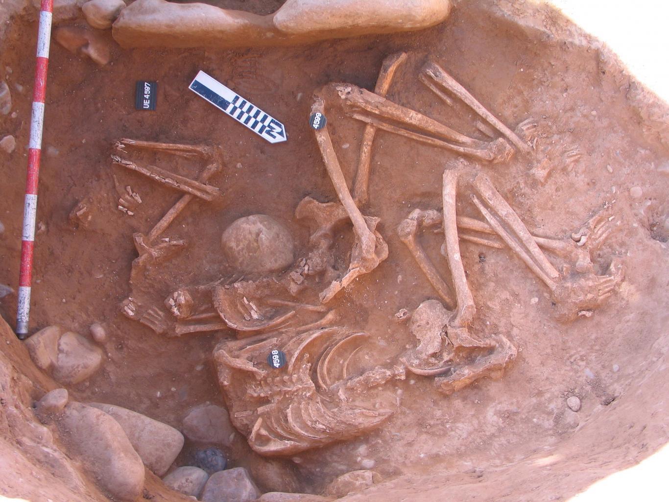 Imagen inhumación campaniforme en hipogeoi
