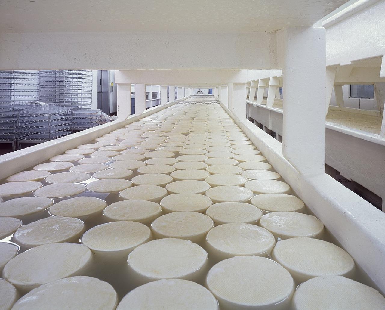 Fabrica de producción de quesos