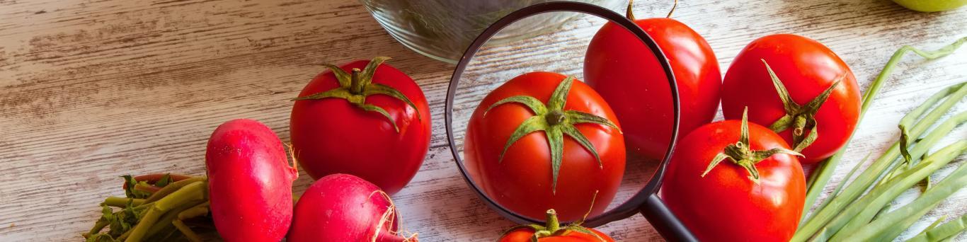 Lupa sobre un tomate