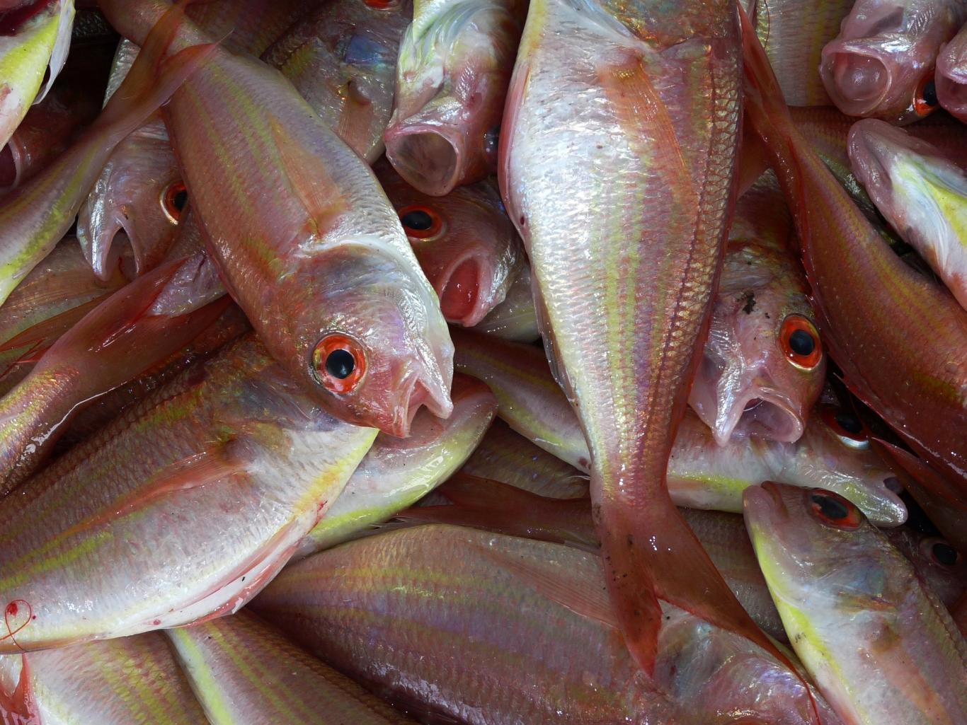 Varios pescados frescos enteros