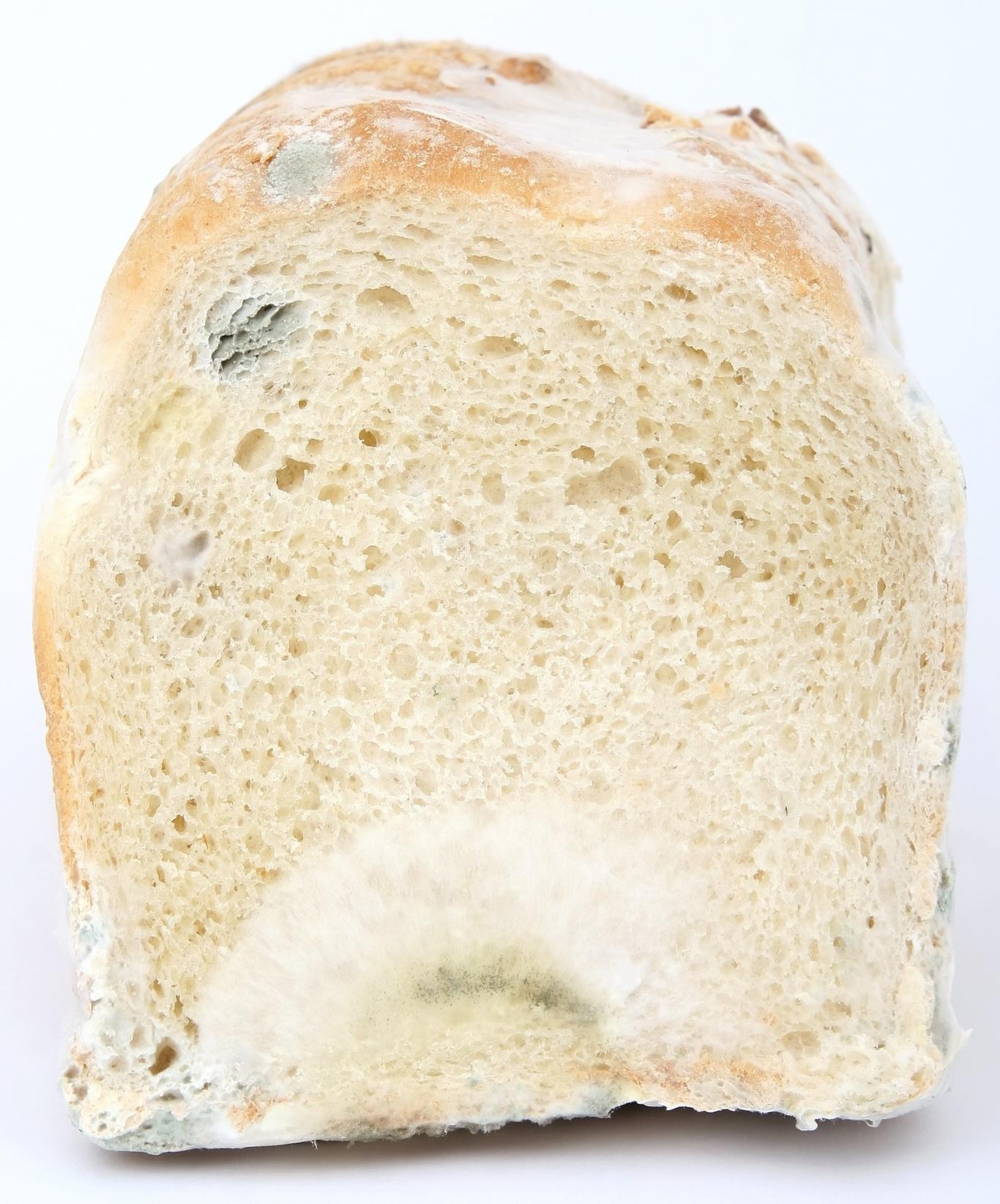 Corte de pan con moho