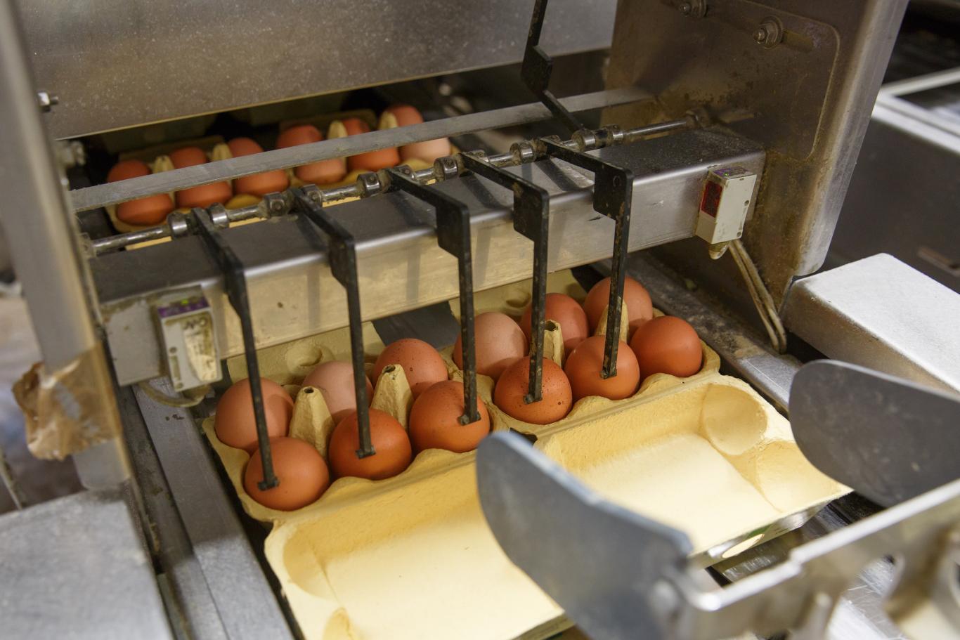 Instalación en la que se clasifican huevos de gallina