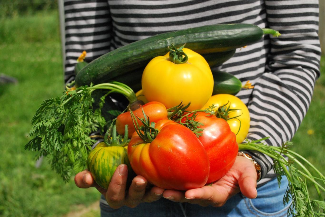 Niño que lleva en la mano varias verduras