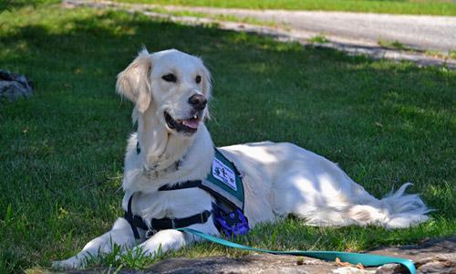 Imagen ilustrativa de un perro de asistencia para personas con discapacidad tumbado en la hierba