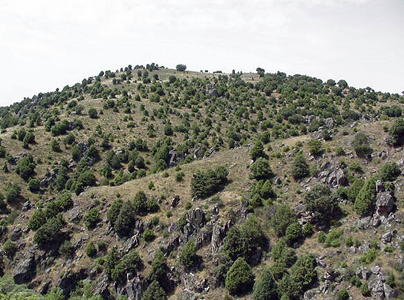 Reserva de la Biosfera Cuenca Alta del río Manzanares. Enebral