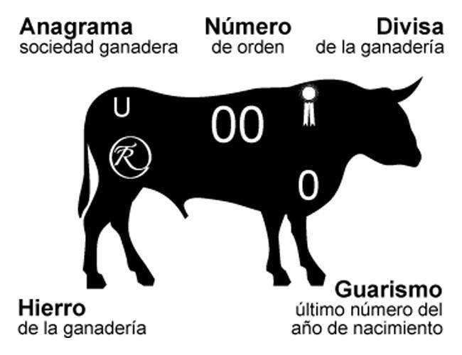 Esquema de las señas de identidad del toro de lidia