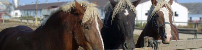 Imagen de caballos en una explotación equina