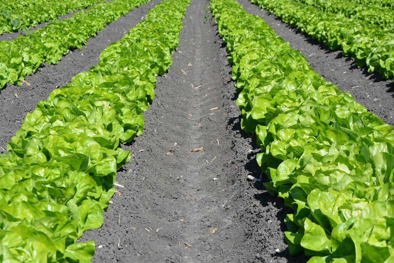 Ayudas a la incorporación de jóvenes agricultores