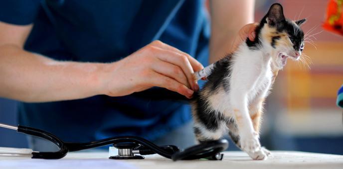 Vacunación de animales domésticos