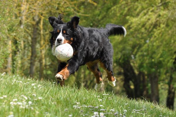 Falsos mitos sobre la esterilización de los animales domésticos