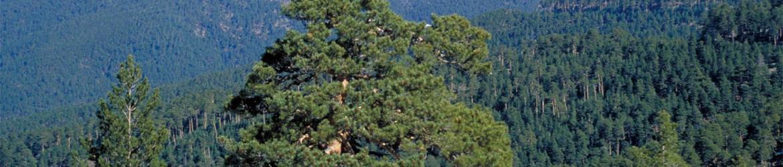 Sección de Parques Naturales y Regionales del Consejo de Medio Ambiente