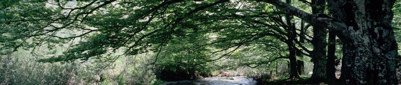 Sección de Reservas de la Biosfera del Consejo de Medio Ambiente
