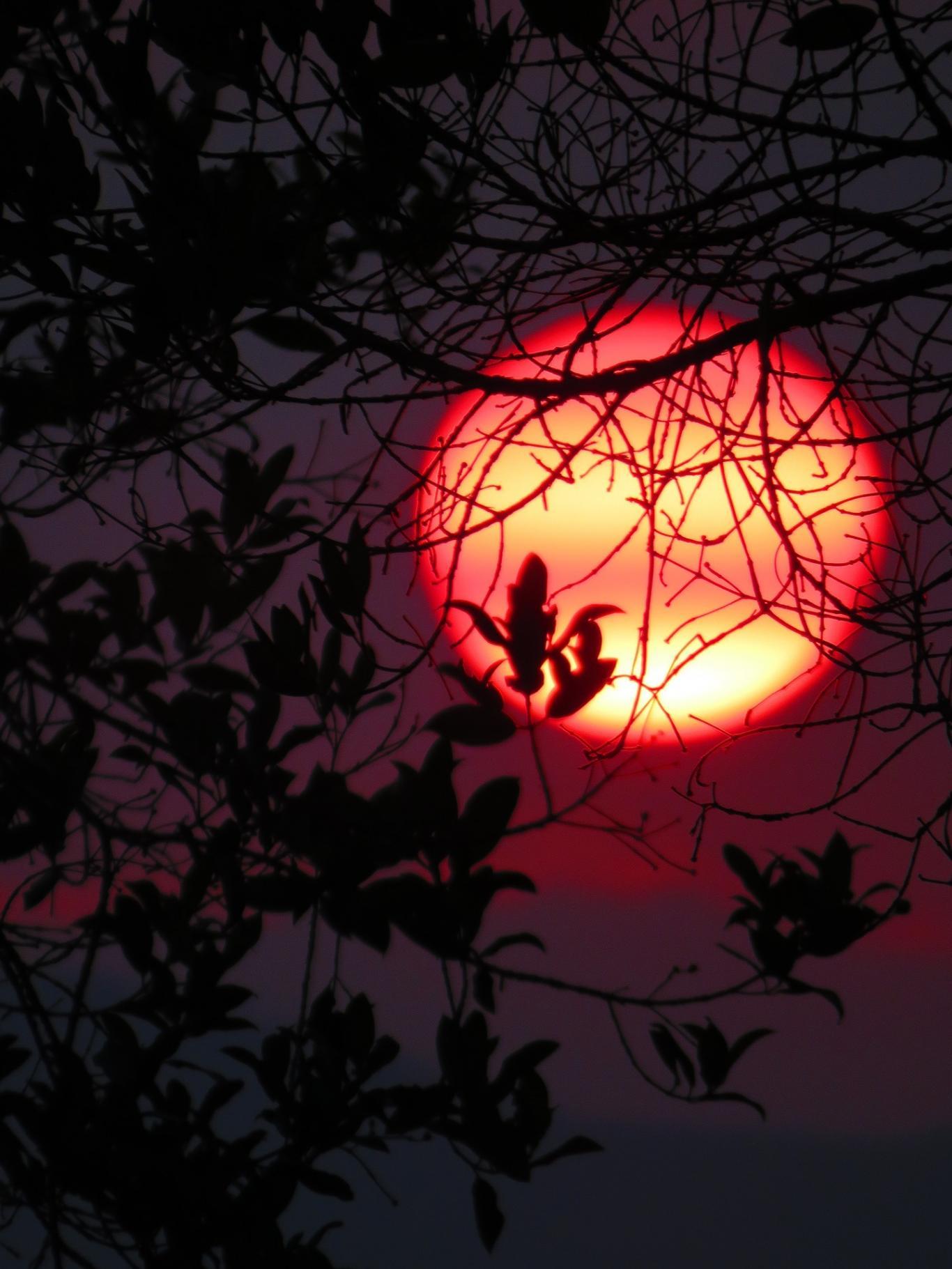 Imagen de un atardecer entre ramas de árbol