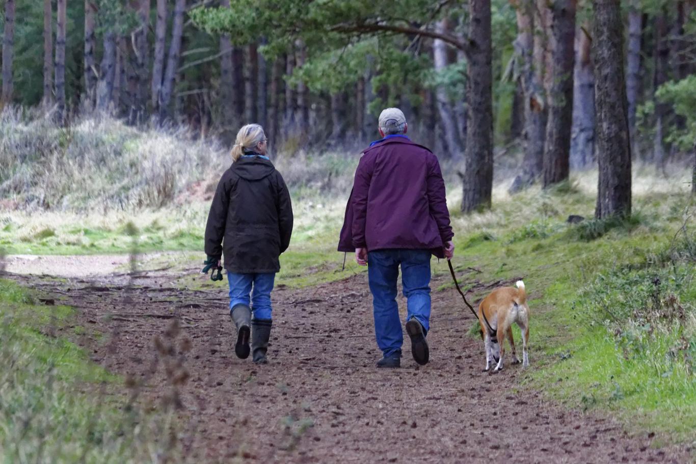Paseo con perro sujeto con correa