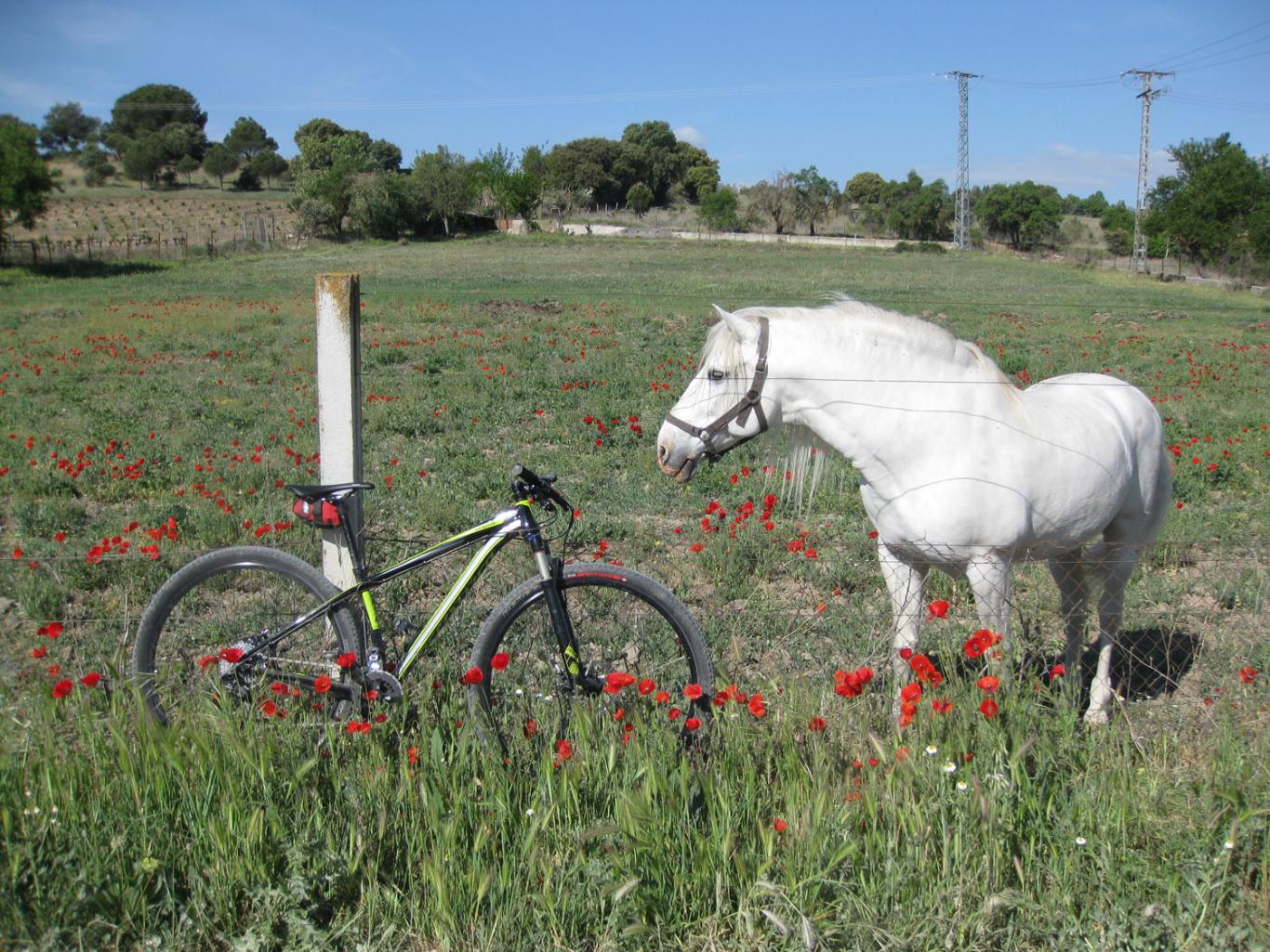 Pradera con caballo pastando y bicicleta apoyada en una verja