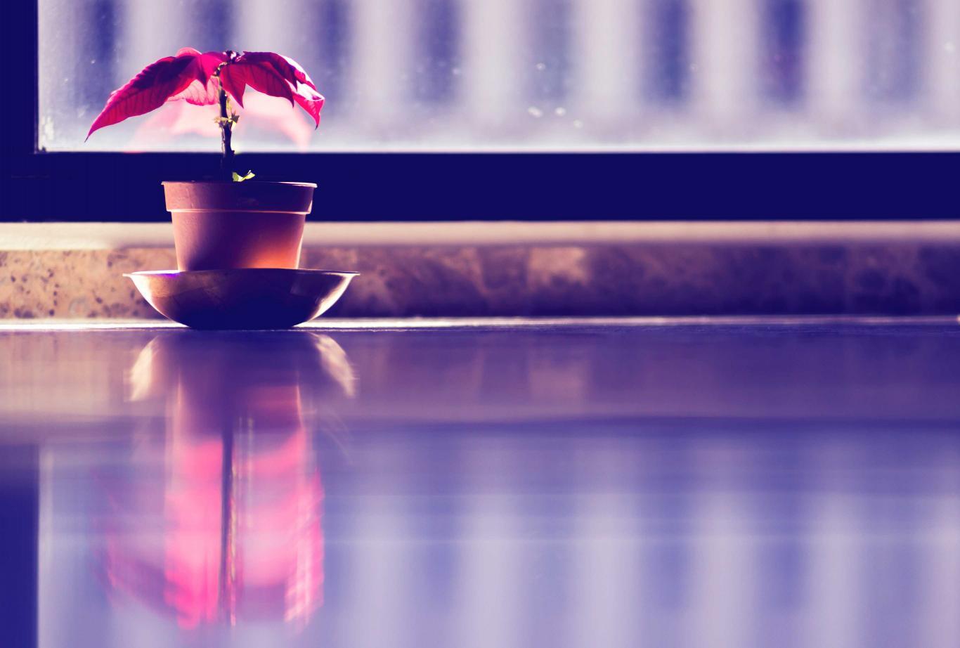 Imagen de una planta