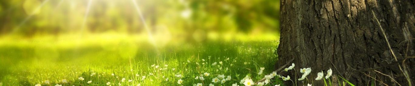Campo de hierba y flores
