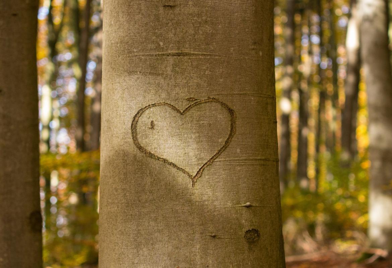 corazón dibujado en árbol