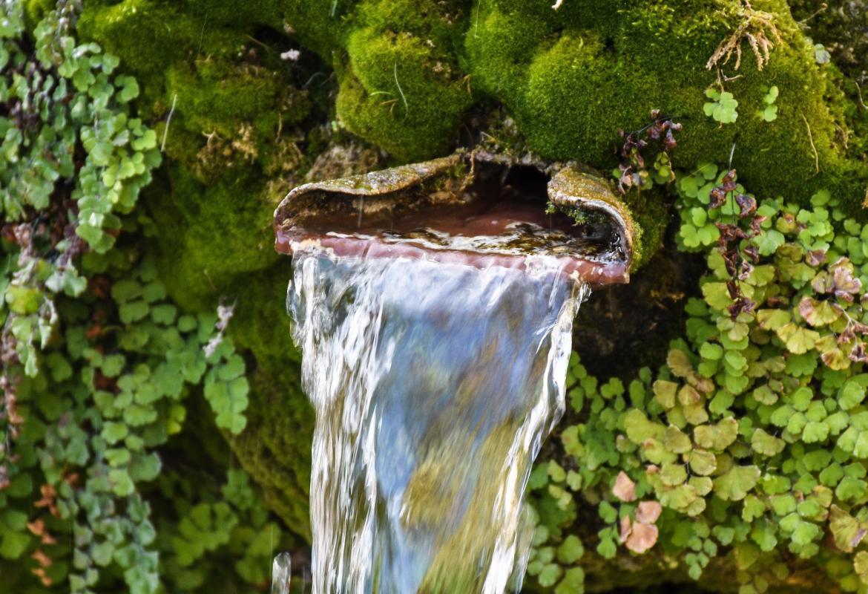 Fuente de agua natural en el monte rodeada de vegetación