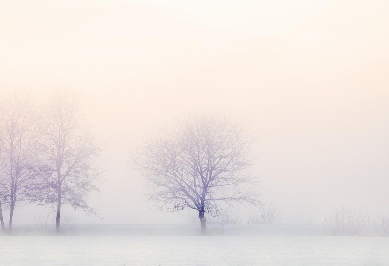 Árboles muy difuminados en un ambiente invernal con niebla