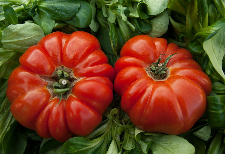 Dos tomates de color rojo sobre hojas de verdura