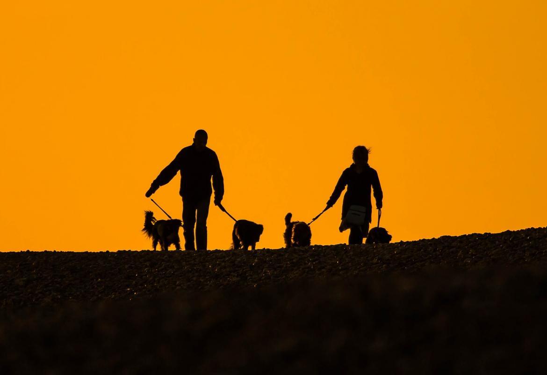 Contraluz al atardecer de dos personas llevando dos perros cada uno