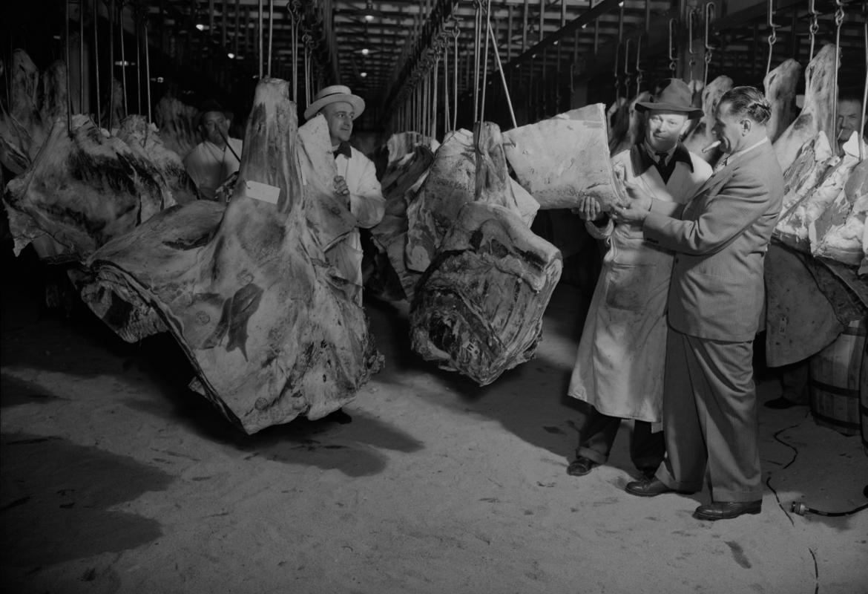 Canales de vacuno en un matadero antiguo inspeccionándose por un operarios del matadero y un seños con traje