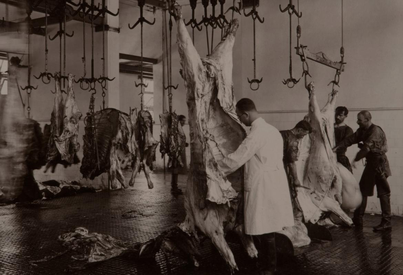 Operarios y veterinarios de un matadero antiguo inspeccionando canales de vacuno