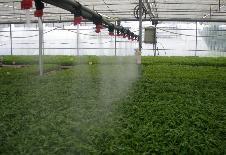 cultivos hortícolas en invernadero
