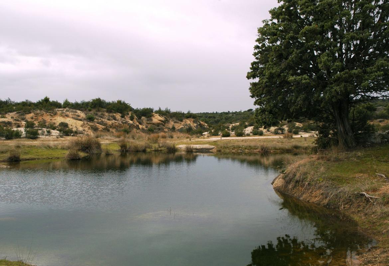 Humedales_Charcas de los Camorchos_Hoyo de Manzanares