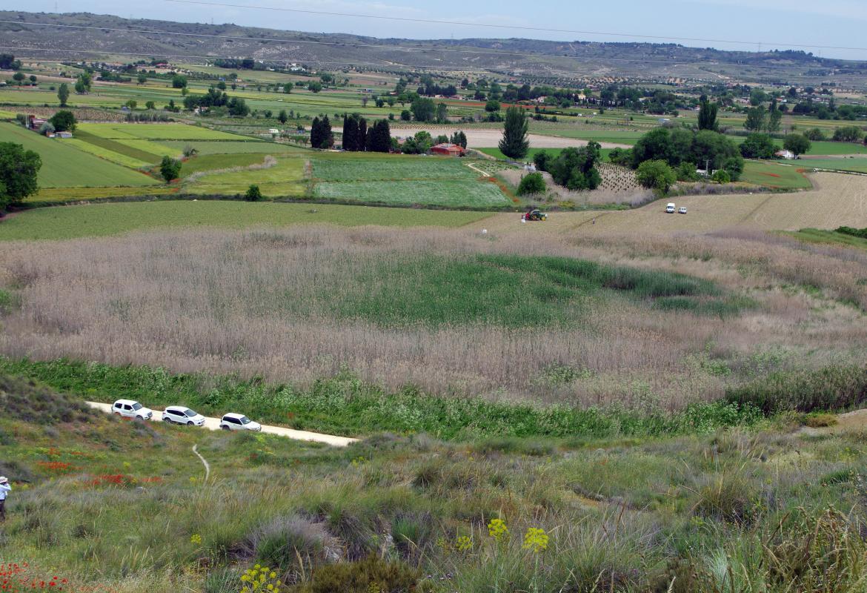 Humedales_Laguna de Casasola_Chinchón