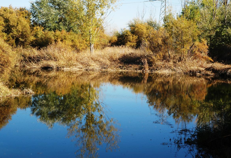 Humedales_Lagunas de la Presa del río Henares_Mejorada del Campo