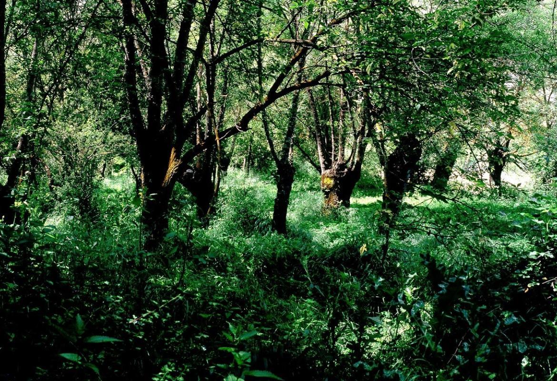 Árboles verde