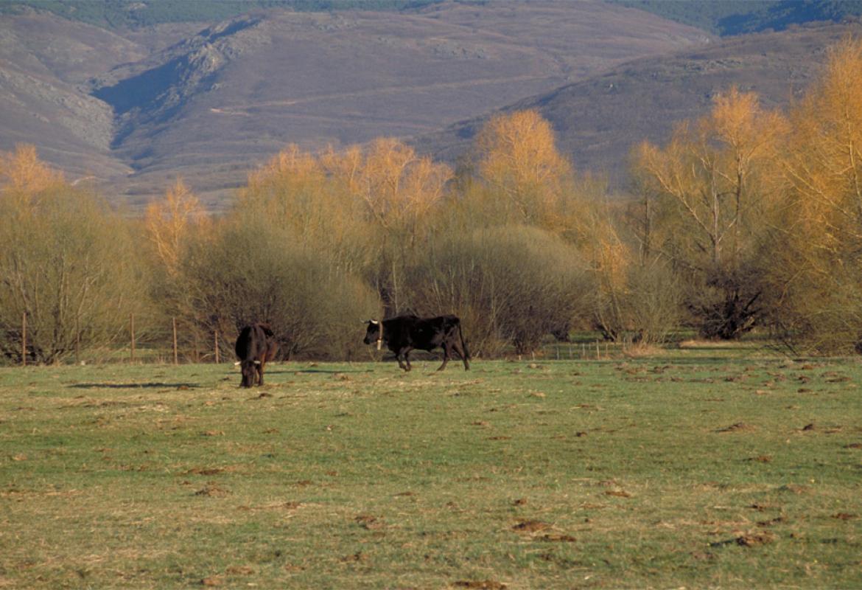 Dehesa en el Valle del Lozoya