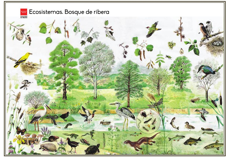 Ecosistemas. Bosque de ribera
