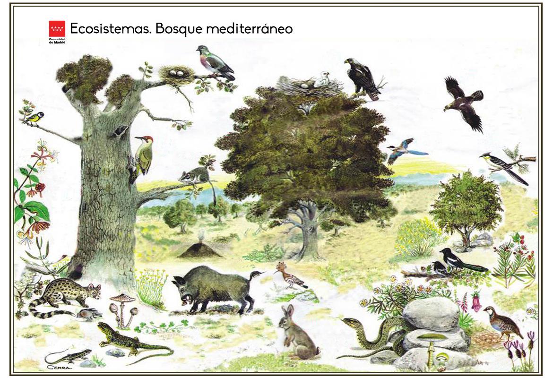 Ecosistemas. Bosque mediterráneo