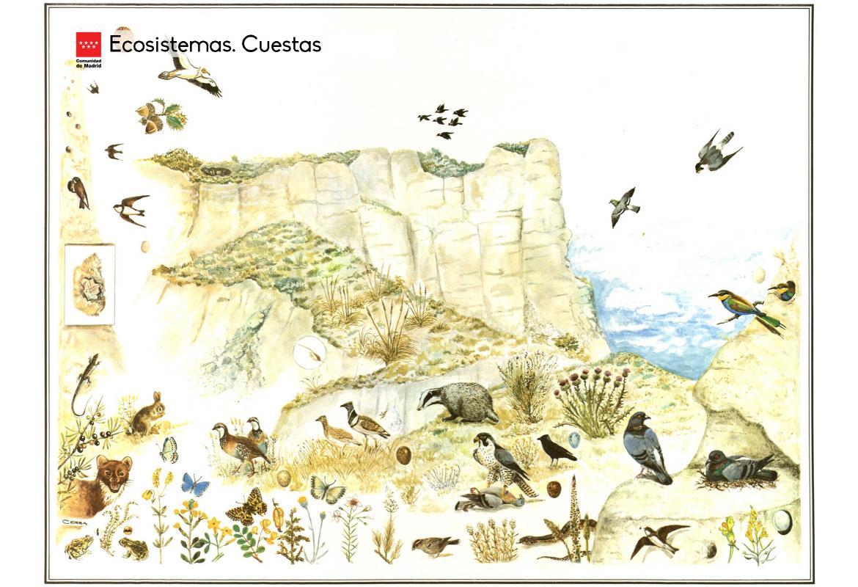 Ecosistemas. Cuestas
