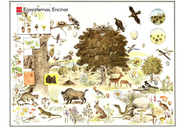 Ecosistemas. Encinar